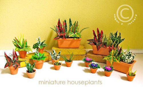Houseplantswide