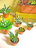 Plantsclose4