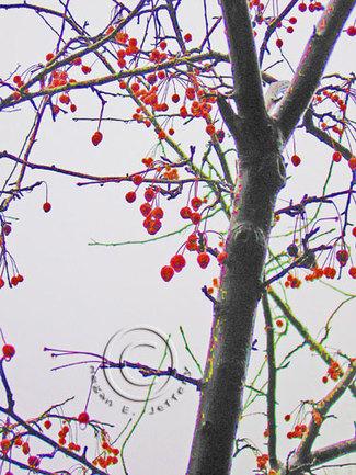 Cherrytreeweb